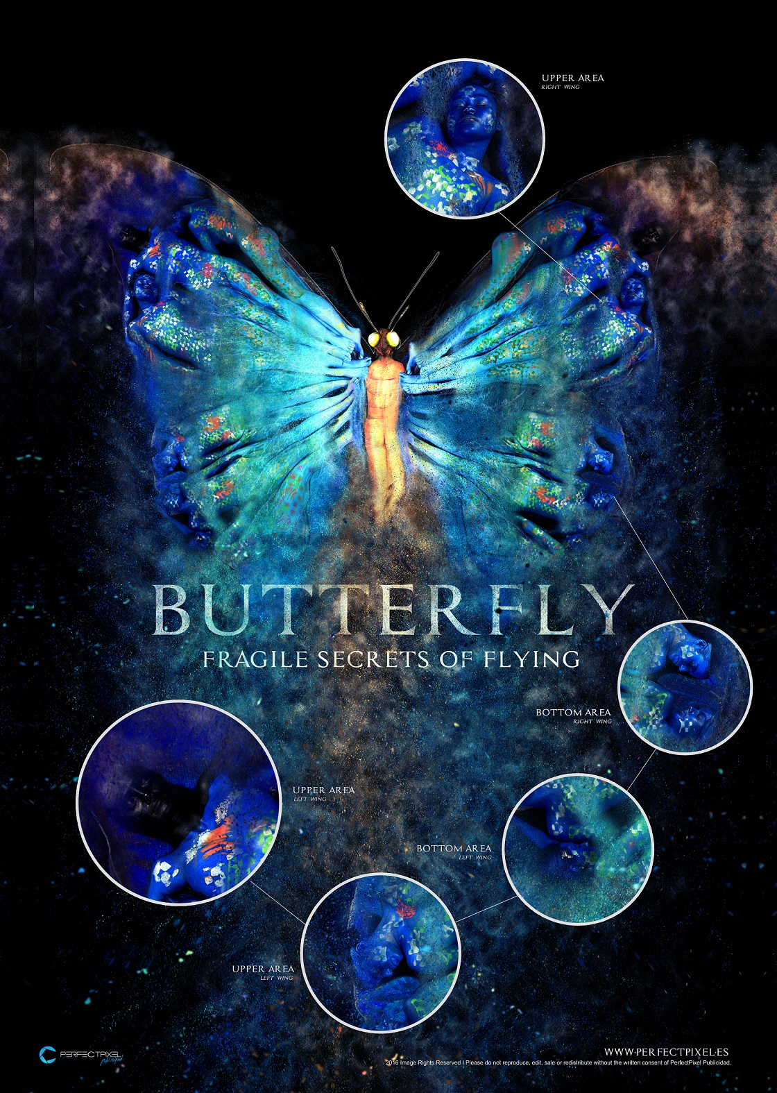 https://www.perfectpixel.es/wp-content/uploads/2016/01/Butterfly-Fragile-Secrets-of-Flying-by-PerfectPixel-Dissection-of-final-composition.jpg